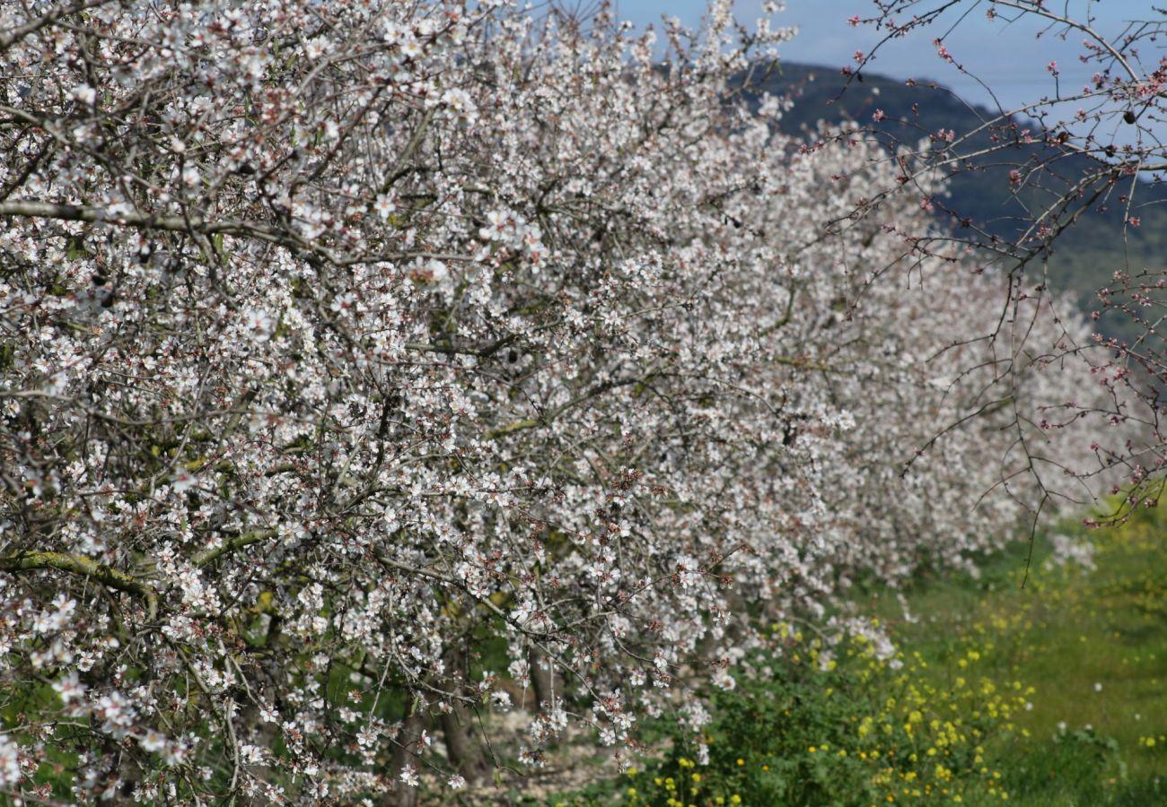 Finca en Selva - Es Molinet Selva villa Mallorca 197