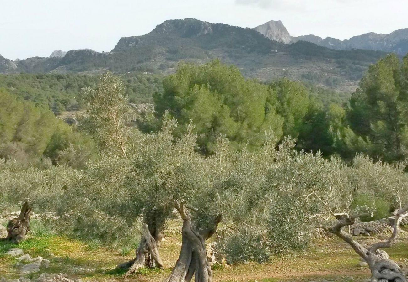 Mallorca Alquileres de fincas vacacionales