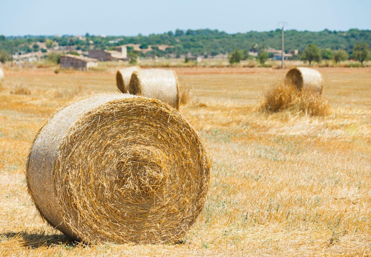 Casa rural en Llubi - Can Cortana finca Llubí 005