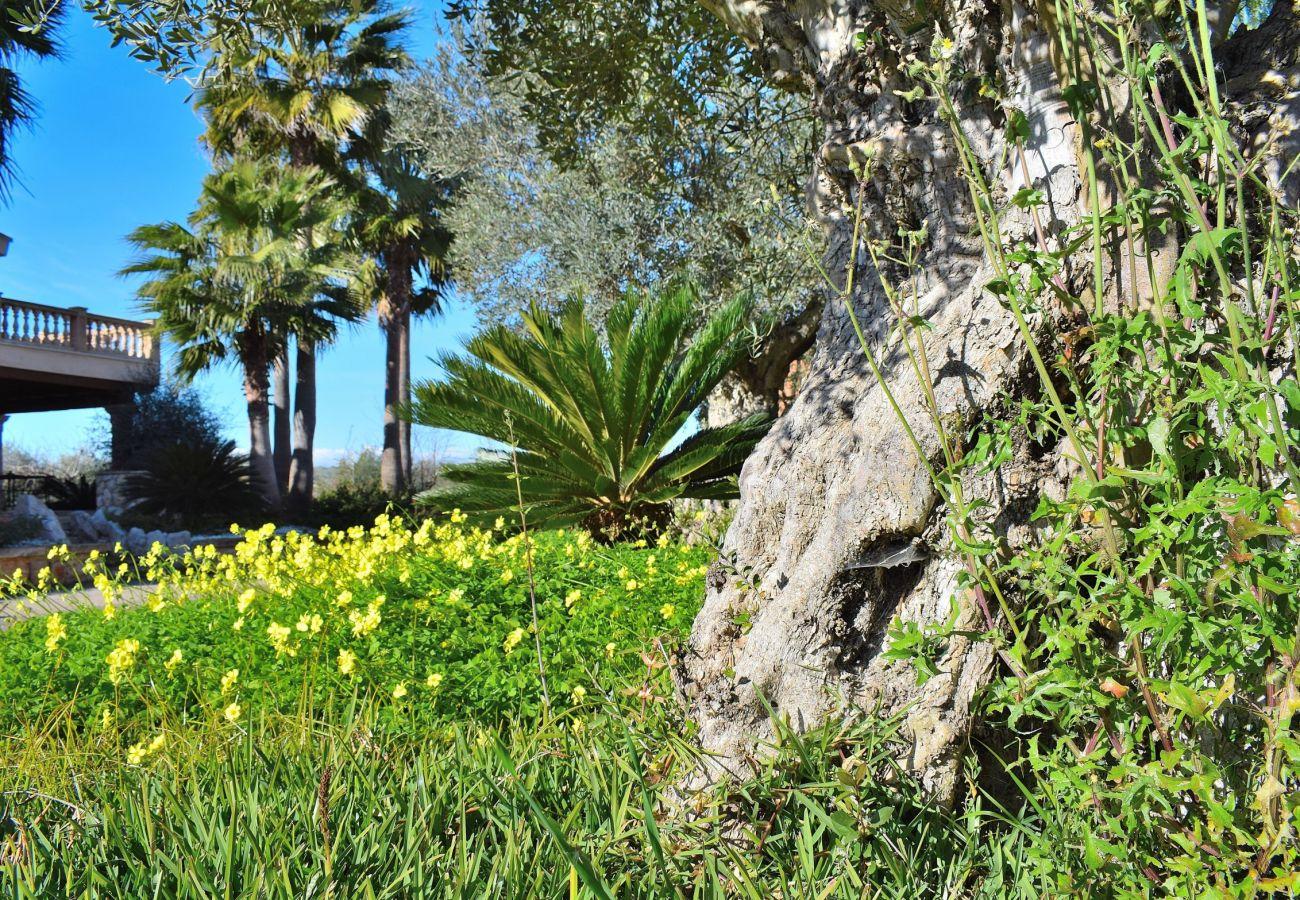 La villa en sineu consta de un amplio jardin