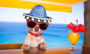 Mallorca Beachs Clubs
