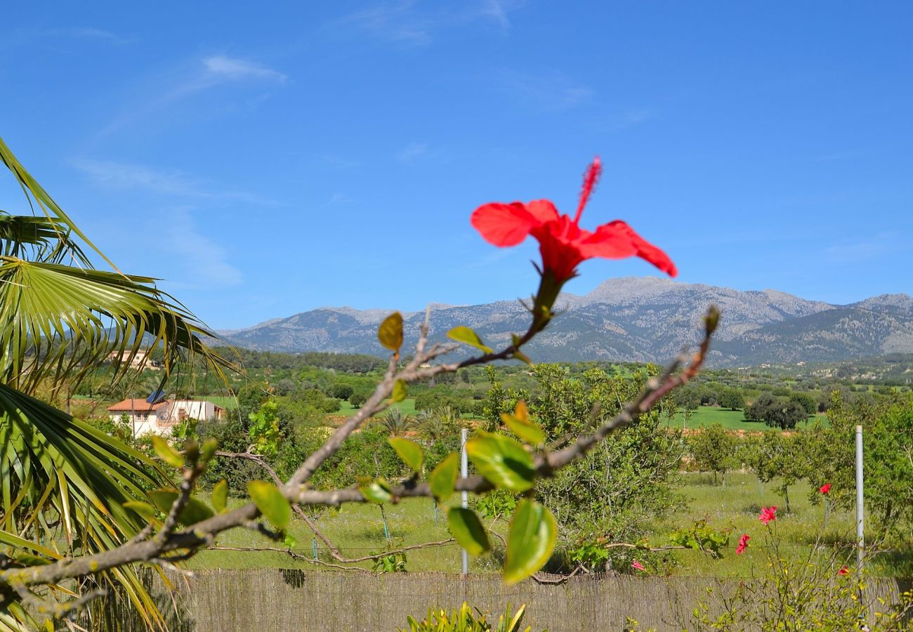 Mallorca Ferienwohnung mieten