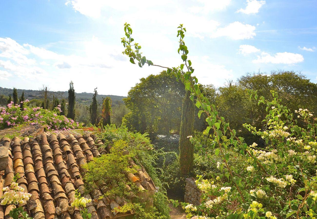 Country house in Llubi - Son Barraquer Llubí finca 047