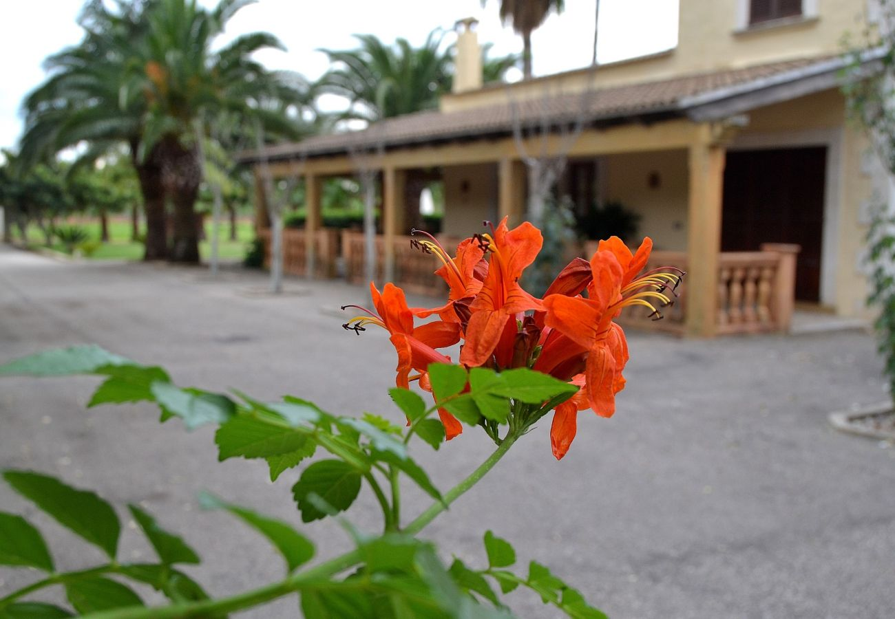 From 100 € per day you can rent your villa in Mallorca LLUIBI
